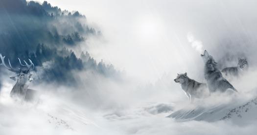 wolf-1350243_1920